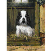 Painting by numbers SPANIEL PUPPY