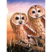 Painting by numbers TAWNY OWLS
